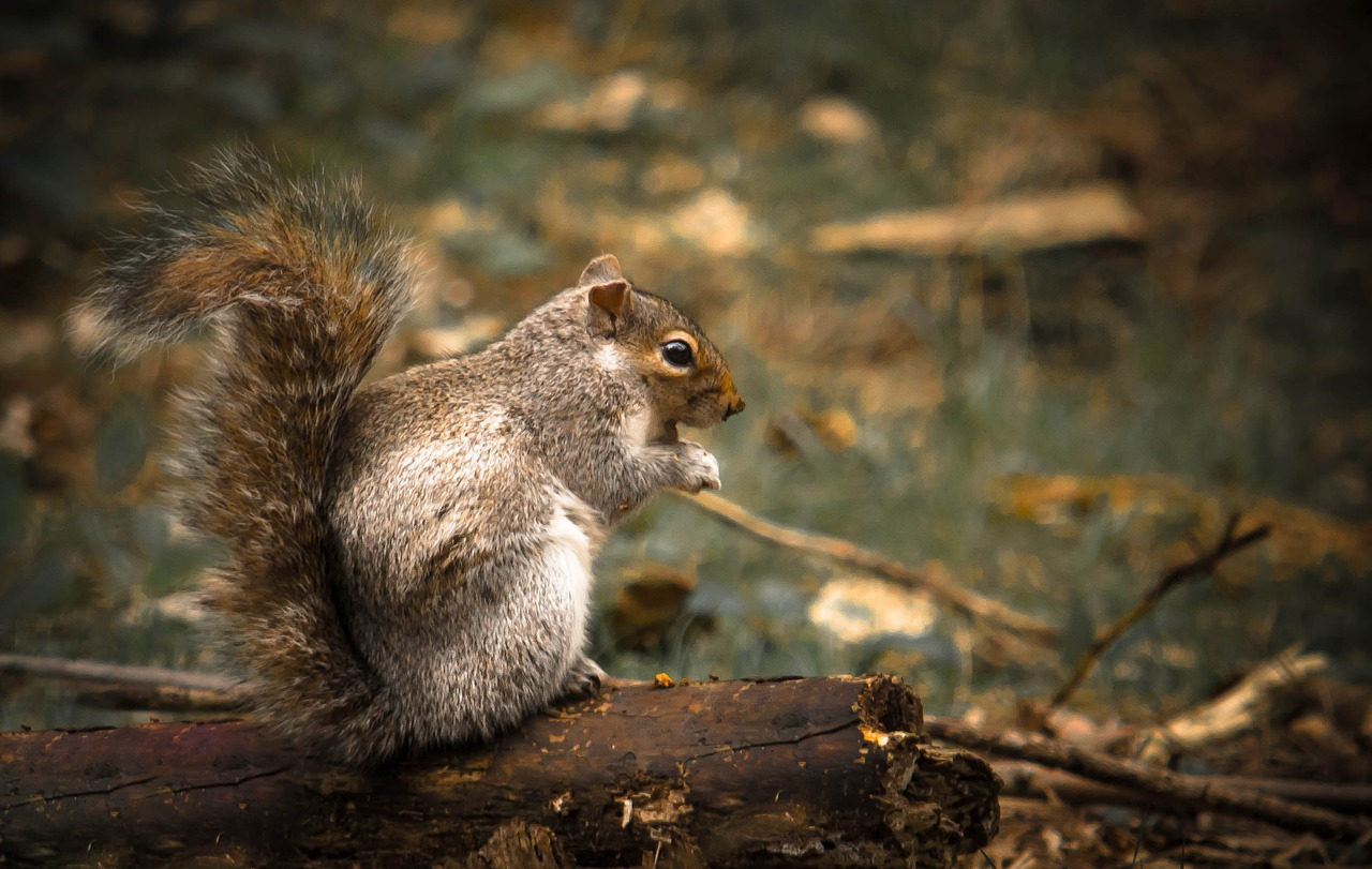 squirrel-1009471_1280_sl4iUiR.jpg